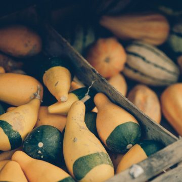 Different varieties of squash in bins at Norman's Farm Market.