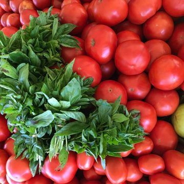 Bunches of basil in the middle of a large pile of ripe red tomatoes.