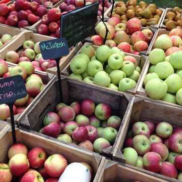 Different varieties of apples in bins for sale at Norman's Farm Market.