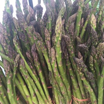 An asparagus bunch from Norman's Farm Market